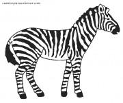 Coloriage dessin  Zebre 10