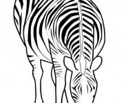 Coloriage dessin  Zebre 19