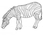 Coloriage dessin  Zebre 9