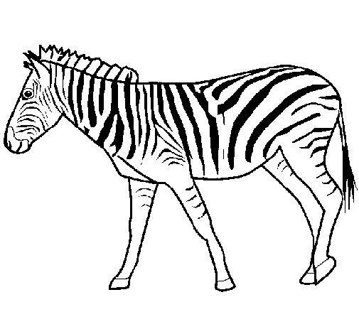 Coloriage z bre t l charger - Zebre a dessiner ...
