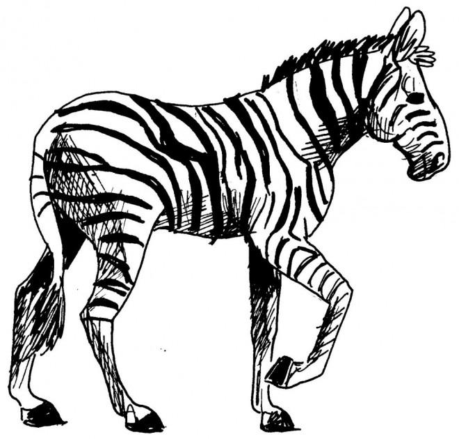 Coloriage et dessins gratuits Zèbre au crayon facile à imprimer