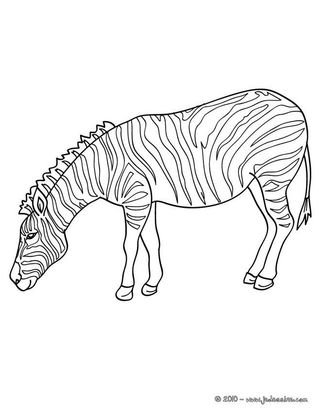 Coloriage z bre baissant la t te dessin gratuit imprimer - Dessin zebre facile ...