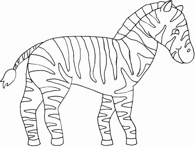 Coloriage z bre couleur dessin gratuit imprimer - Coloriage zebre a imprimer ...