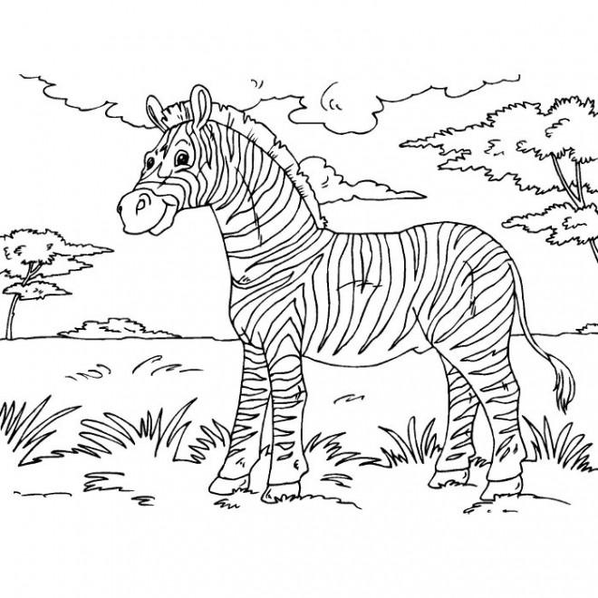 Coloriage Zèbre dans la nature dessin gratuit à imprimer