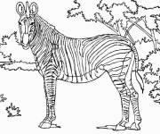 Coloriage et dessins gratuit Zèbre dans la savane à imprimer