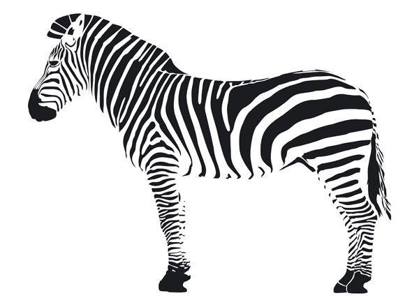 Coloriage Bebe Zebre.Coloriage Zebre Realiste Dessin Gratuit A Imprimer