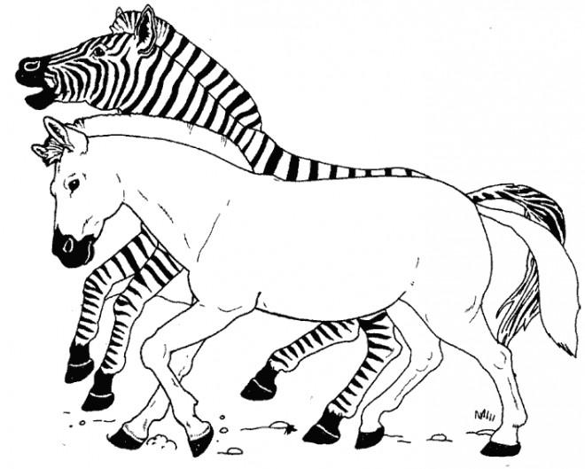 Coloriage et dessins gratuits Zèbres galopant à imprimer