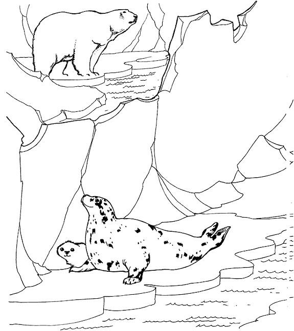 Coloriage et dessins gratuits Animaux polaires à imprimer