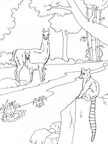Coloriage et dessins gratuits Animaux terrestres à imprimer