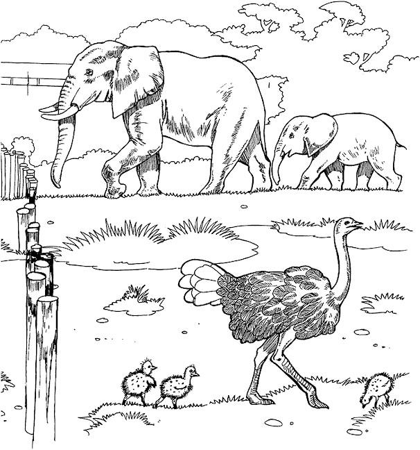 Coloriage et dessins gratuits Eléphants et autruche au Zoo à imprimer