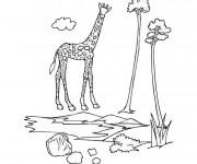 Coloriage et dessins gratuit La giraffe à imprimer