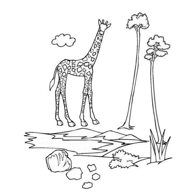 Coloriage et dessins gratuits La giraffe à imprimer