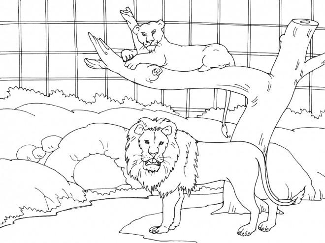 Coloriage et dessins gratuits Le Cage de Lion à imprimer