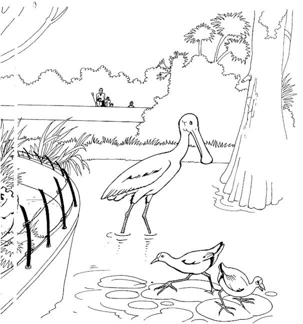 Coloriage et dessins gratuits Oiseaux dans l'eau à imprimer