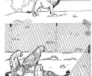 Coloriage Prédateurs dans le Zoo