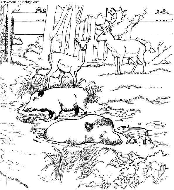 Coloriage et dessins gratuits Sangliers au Zoo à imprimer