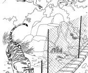 Coloriage et dessins gratuit Singes passant d'une arbre à l'autre à imprimer