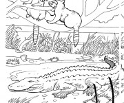 Coloriage dessin  Zoo 16