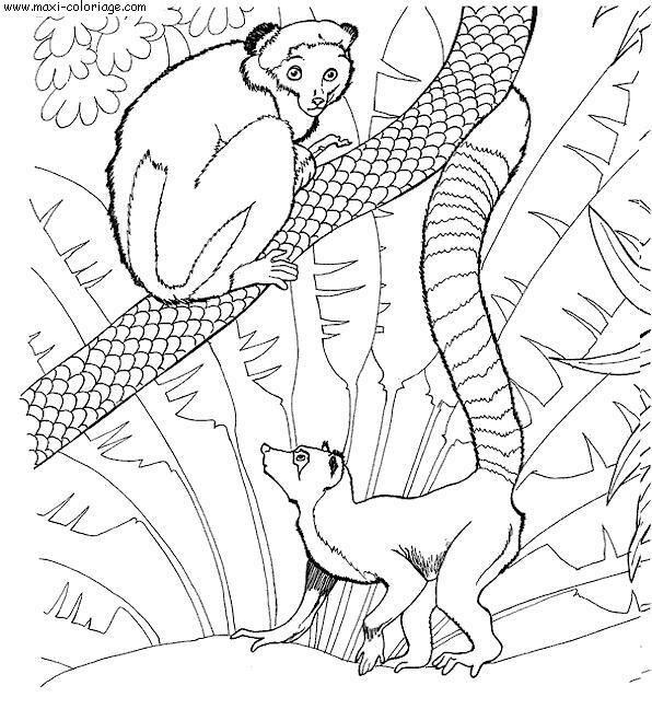 Coloriage et dessins gratuits Zoo pour enfant à imprimer