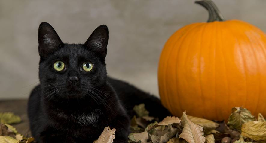 Halloween: profitez des chats noirs et des hiboux