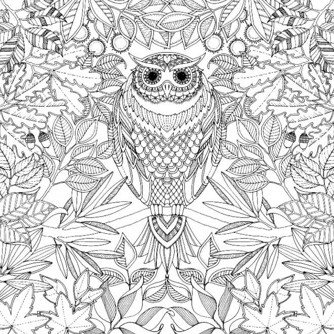 Coloriage et dessins gratuits Adulte Hibou à imprimer