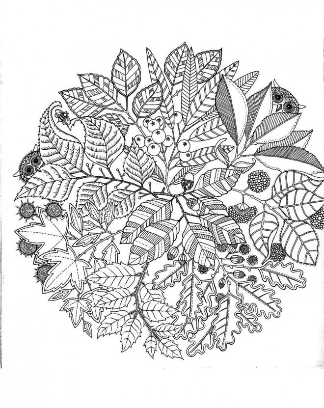 Coloriage et dessins gratuits Adulte Nature à imprimer