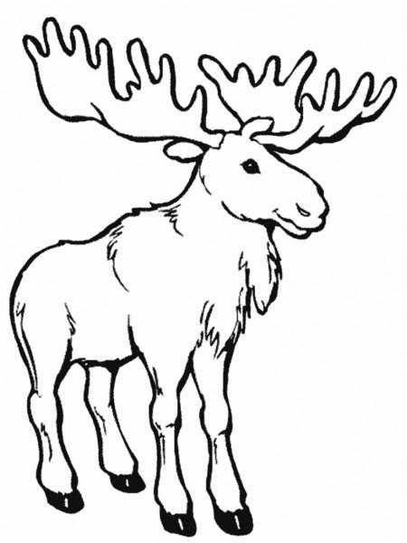 Coloriage et dessins gratuits Animaux Canada à imprimer