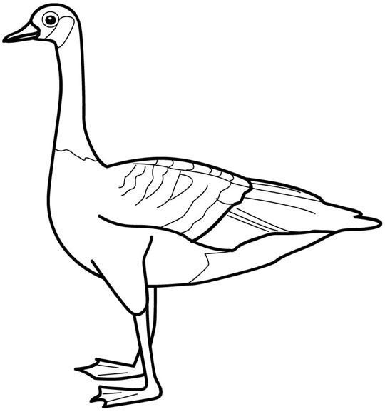 Coloriage et dessins gratuits Animaux de Canada  vectoriel à imprimer