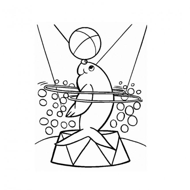 Coloriage et dessins gratuits Phoque de Cirque en ligne à imprimer
