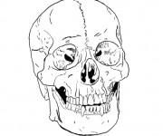 Coloriage et dessins gratuit Crâne mexicain facile à imprimer