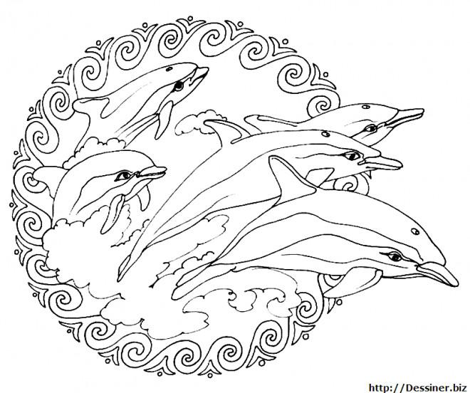 Coloriage Mandalas Dauphins Adulte Dessin Gratuit A Imprimer