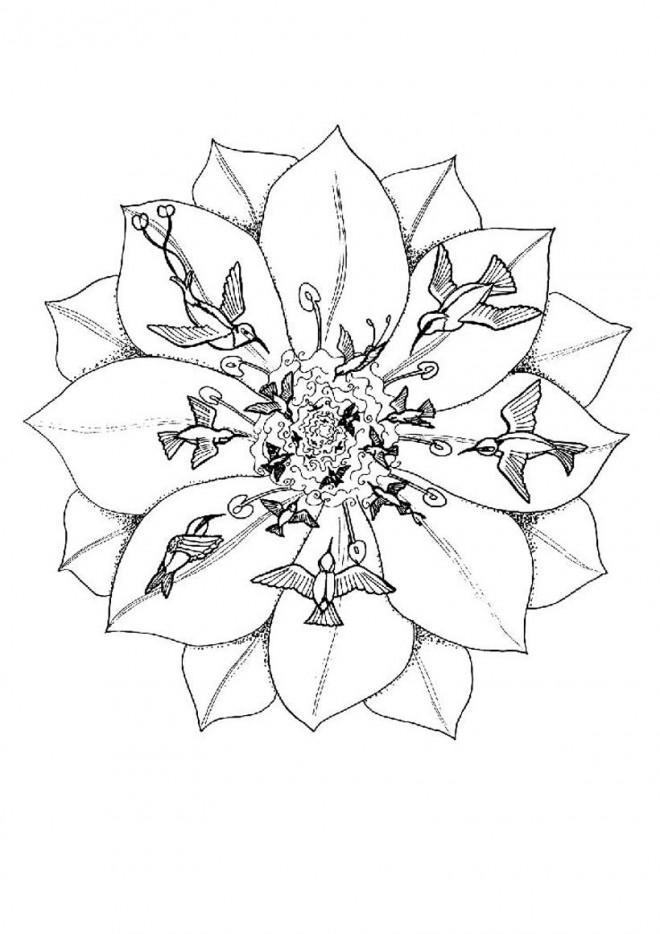 Coloriage Mandalas Oiseaux Et Fleurs Dessin Gratuit A Imprimer