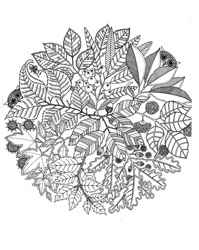 Coloriage et dessins gratuits Mandala Fleurs et Plantes à imprimer