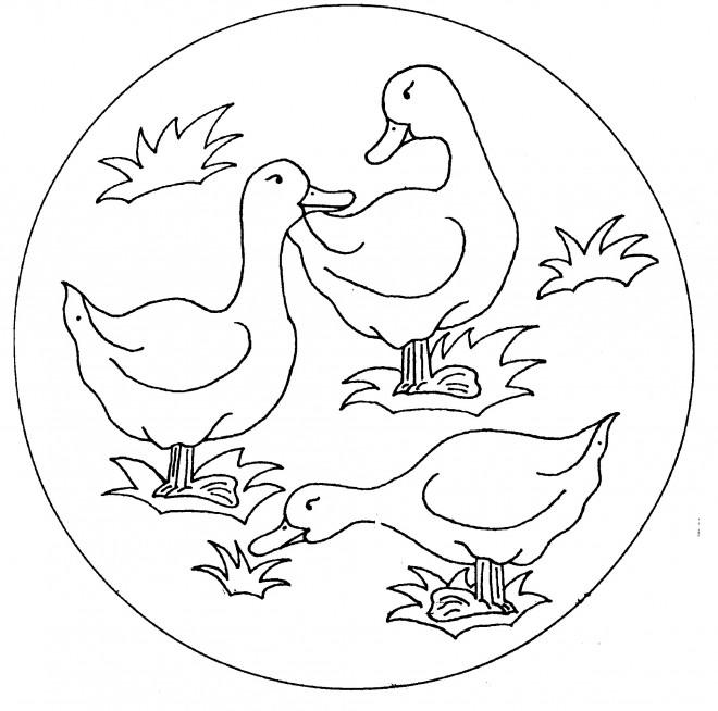 Coloriage et dessins gratuits Les canards à imprimer