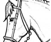 Coloriage et dessins gratuit Portrait Cheval en noir et blanc à imprimer