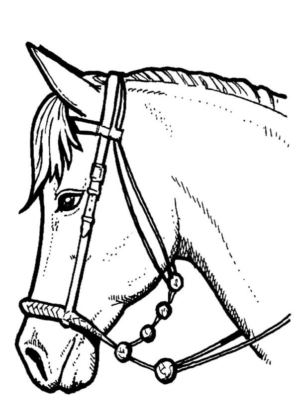 Coloriage et dessins gratuits Portrait Cheval en noir et blanc à imprimer
