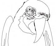 Coloriage Portrait d'un Perroquet