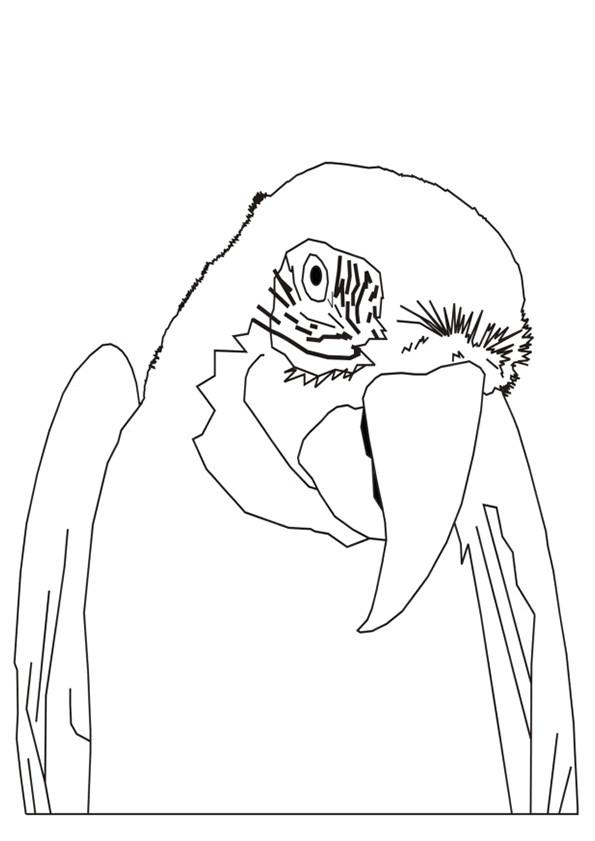 Coloriage et dessins gratuits Portrait d'un Perroquet à imprimer