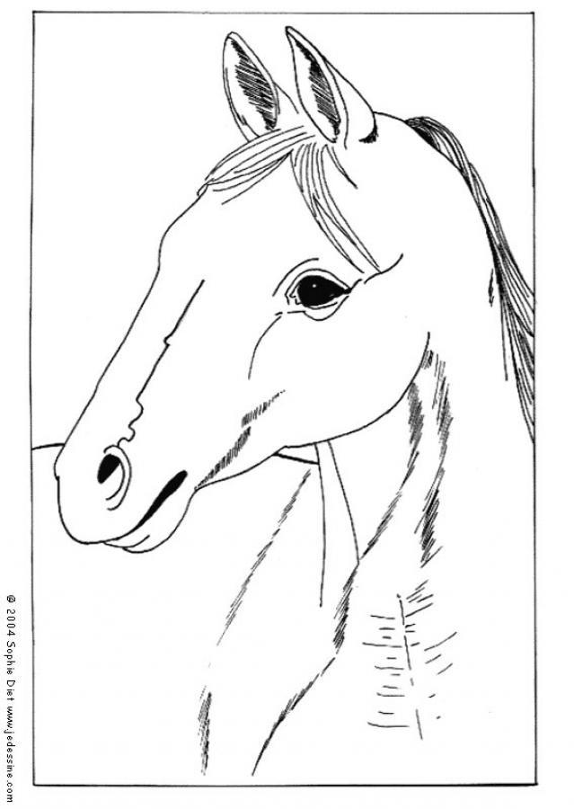 Coloriage portrait de cheval facile dessin gratuit imprimer - Dessin facile de cheval ...