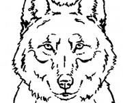 Coloriage Portrait Loup