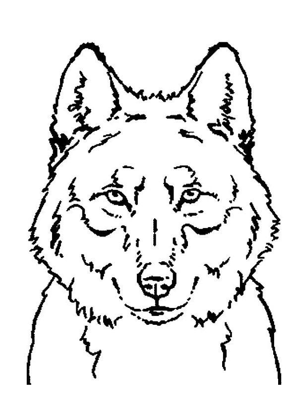 Coloriage et dessins gratuits Portrait Loup à imprimer