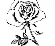 Coloriage Rose adorable