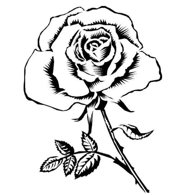 Coloriage et dessins gratuits Rose adorable à imprimer
