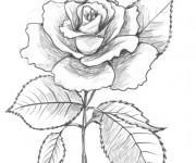 Coloriage Rose au crayon