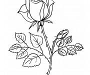 Coloriage Rose en couleur