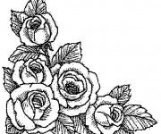 Coloriage dessin  Roses 22