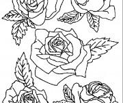 Coloriage Roses facile