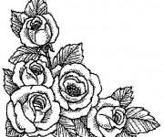 Coloriage Roses réalistes