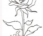 Coloriage Une Fleur symbole d'amour