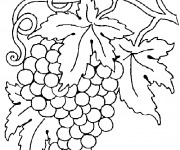 Coloriage Vintage Fruit